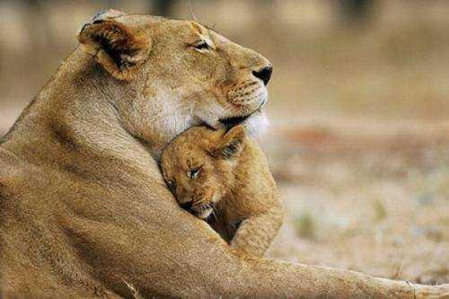 love-animal.jpg